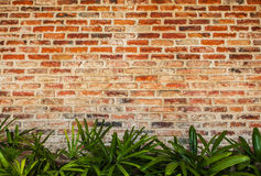 Brick wall with green leaves Royalty Free Stock Photo