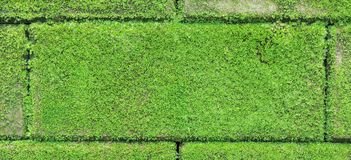 Brick wall with green moss Stock Image