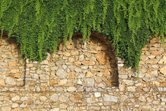 Brick wall and growing plant Stock Photography