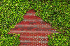 Brick Wall and Ivy Stock Photos