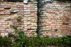 Brick wall with ivy. Stock Image