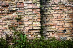 Brick wall with ivy. Stock Photography
