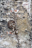 Brick wall with layers of weathered stucco. Brick wall with layers of old stucco. A rusty metal plate and a dead plant on the wall give this background a feeling Royalty Free Stock Photos