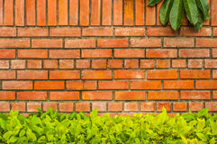Brick wall with leaf. Old brick wall with leaf royalty free stock photography