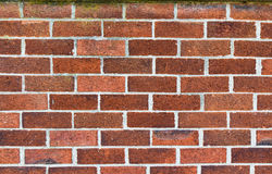 Brick wall. Maroon  texture. Royalty Free Stock Images