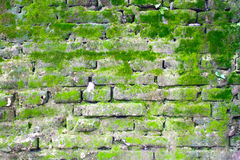 Brick wall with moss Royalty Free Stock Image