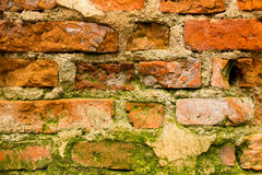 Brick wall moss Stock Photography