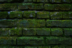 Brick wall with moss Stock Photography