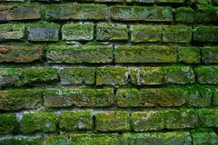 Brick wall with moss Stock Photos