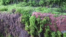 Brick wall with moss old natural texture pattern stock photography