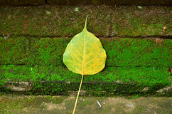 Brick wall with moss. Brick wall with moss and yellow leaf Royalty Free Stock Images