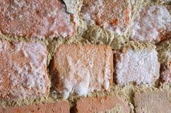 Wall with mould fungus. Brick wall with mould fungus Royalty Free Stock Photos