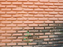 Brick wall old. Background of old vintage brick wall and weed Royalty Free Stock Photography
