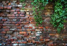 Brick wall overgrown we flatten Stock Photo