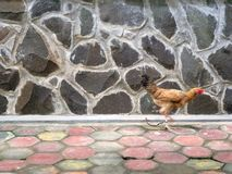 Brick wall and paving floor with chicken Stock Photography