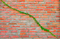 Brick Wall Plant Royalty Free Stock Photo