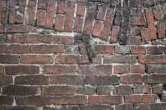 Brick wall with plant traces Stock Photo