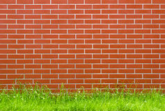 Brick wall. Red brick wall with grass floor Stock Images