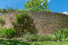 Brick wall and roses Royalty Free Stock Photography