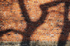 Brick wall with shadow pattern. Red brick wall with abstract tree shadows in warm light Royalty Free Stock Image