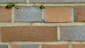 Brick wall with some vegetation on it. Taken in germany Royalty Free Stock Photos