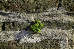 Brick wall stone background - texture for continuous rocks.  stock images