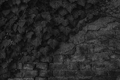Brick wall stone background - texture for continuous rocks. For web site or mobile devices stock image