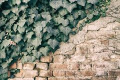 Brick wall stone background - texture for continuous rocks. For web site or mobile devices stock photo