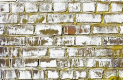 Brick wall struck by a fungus Royalty Free Stock Image