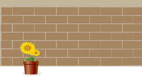 Brick-Wall and Sunflower on pot Royalty Free Stock Images