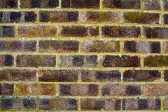 Brick Wall Texture. Of aged bricks in good condition Royalty Free Stock Photos