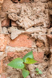 Brick wall. Texture for background Royalty Free Stock Photography