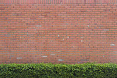 Brick wall texture background with green bush Stock Photo