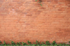 Brick wall texture background Royalty Free Stock Photos