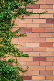 Brick wall texture with plants as background Royalty Free Stock Image