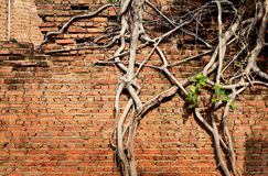 Brick wall texture and tree Stock Photos