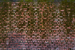 Brick Wall. Textured Brick Wall with moss on it Royalty Free Stock Photos