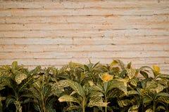 Brick wall with tree bush Royalty Free Stock Photography