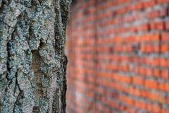 Brick wall and tree Stock Photo