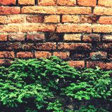 Brick wall and tree. Royalty Free Stock Image