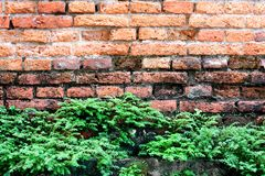 Brick wall and tree. Royalty Free Stock Photos