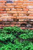 Brick wall and tree. Stock Images
