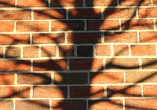 Brick wall tree silhouette texture background.  royalty free stock photos