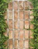 Brick wall with vegetation Stock Image