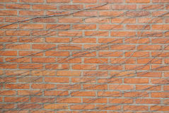 Brick wall with vine on it Royalty Free Stock Photo