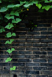 Brick wall with vines Royalty Free Stock Photos