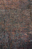 Brick wall and wild grapes Stock Images
