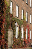Brick wall with windows and ivy in autumn Stock Photo