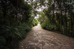 Brick Way into a Forest in Brasilia, Brazil. Parque Nacional Agua Mineral royalty free stock photo