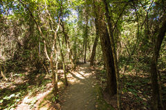 Brick Way into a Forest in Brasilia, Brazil. Parque Olhos d'agua royalty free stock image